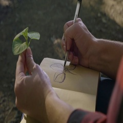 Closeup Of Woman Holding A Plant In One Hand, As She Sketches It with The Other Stock Footage