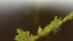 Trees growing on a floating log barrier at a Nordic lake, aerial shot Stock Footage