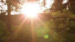 Backlit Flies against Sunflares Stock Footage