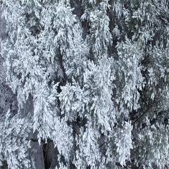 Aerial view of snowy forest at winter Stock Footage