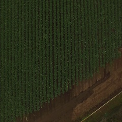 4K Aerial Drone Pasture Rows Stock Footage