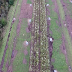 Happy life - Organic pig farm seen from above Stock Footage