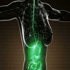 Loop science anatomy scan of human digestive system glowing Stock Footage