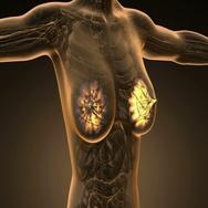 loop science anatomy scan of woman mammaria glands glowing Stock Footage