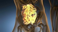 Science anatomy scan of human small intestine glowing with yellow Stock Footage