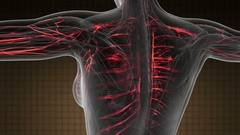 Science Anatomy Scan Of Woman Heart And Blood Vessels Glowing Stock Footage