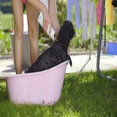 Applying shampoo on black dog fur in bathtub outside 4K Stock Footage