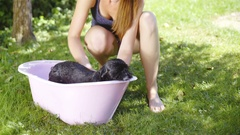 Cleaning dog with water outside in pink bathtub 4K Stock Footage
