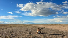 Animal Skull in the steppe of Mongolia. Full HD. Stock Footage