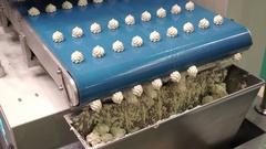 Biscuit depositing machine Stock Footage