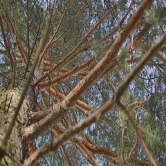 Tree / trunk texture with very shallow depth of field Stock Footage