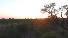 Sunset leaking through a tree in Krugerpark Stock Footage