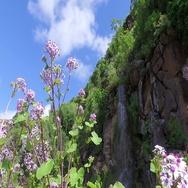 Falls in a botanical garden. Gran Canaria. Spain Stock Footage