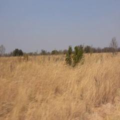 Game Drive in Hwange National Park (Zimbabwe; 4k) Stock Footage
