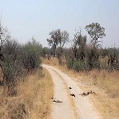 Hwange National Park located in Zimbabwe (4k footage) Stock Footage
