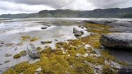 Seaweed exposed during tide, Left to right slider dolly over seaweed and rocks Stock Footage