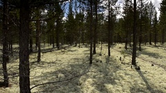 Left to right slider dolly move along Reindeer moss forest floor, in shades of Stock Footage