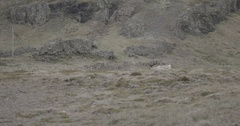 Deer running in the mountainous region Stock Footage