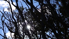 Sun Reflection Passing throught Tree branches Stock Footage