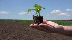 Agriculture Concept Presentation Country Farmer Recommend Bio Plants. Stock Footage