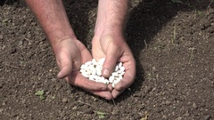 Farmer Presenting Close View White Beans Prepared for Seeding. Stock Footage