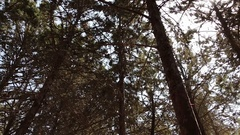 Sun through Forest Treetops - Slow Rotating Pan Stock Footage