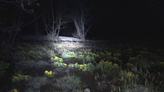 Slough in the night forest Stock Footage
