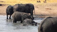 Elephants at a waterhole (Hwange NP, Zimbabwe, 4K) Stock Footage