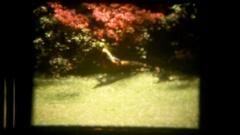 Vie bird exploring garden Stock Footage