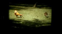 Vie birds on garden free Stock Footage