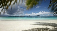 Palm fronds and beach at Salomon Bay, St John, United States Virgin Islands Stock Footage