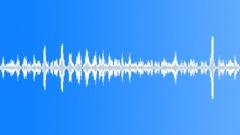 Many seagulls Sound Effect