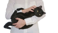 Businesswoman holding a cat in her arms Stock Footage