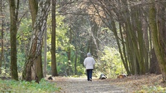 Lone senior woman strolling in autumn park, healthy lifestyle, exercise Stock Footage