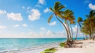 Coastline with palm trees Stock Footage