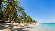 Palm trees on beach Stock Footage