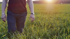 Close-up of lovers taking each other by the hand. Man and woman walk in long Stock Footage