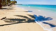 Sandy beach with palm trees Stock Footage