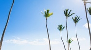Parasol and palm trees on beach Stock Footage