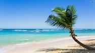 Palm tree on beach Stock Footage