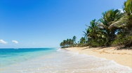 Seascape and palm trees Stock Footage
