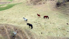 Flying over hourses grazing near small river Stock Footage