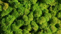 Reindeer moss wall, green wall decoration made of reindeer lichen Cladonia Stock Footage