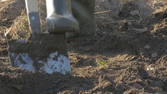 Shovel stuck into the earth in the foreground and a man digging a soil in the Stock Footage