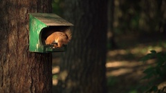 Squirrel in the bird feeder in the forest, night, light, beautiful shot slow Stock Footage