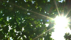 Sun breaking through the green leaves. Stock Footage
