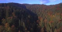 Aerial of autumn trees in Carpathian mountains Ukraine Stock Footage