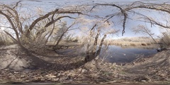 360 virtual reality view of a pond in the late Fall Stock Footage