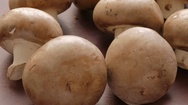 Raw mushrooms Stock Footage