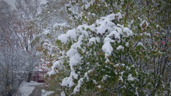 Green bush covered with snow. Stock Footage